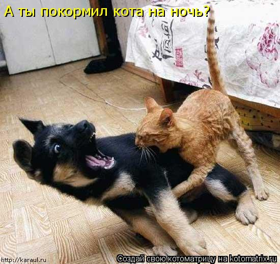 Котоматрица: А ты покормил кота на ночь?