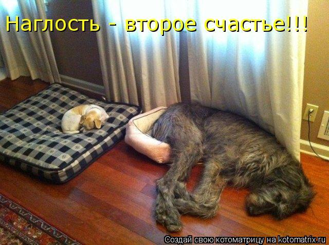 Котоматрица: Наглость - второе счастье!!!