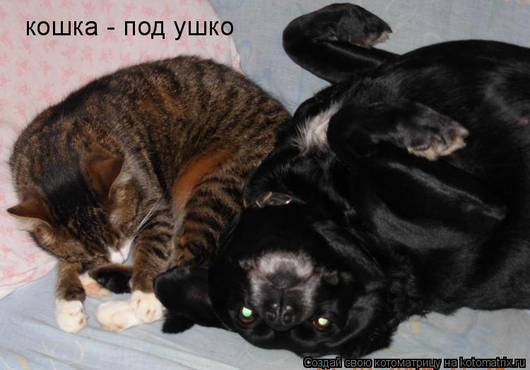 Котоматрица: кошка - под ушко