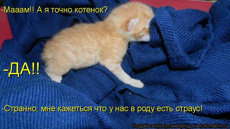 Котоматрица: -Мааам!! А я точно котенок? -ДА!! -Странно, мне кажеться что у нас в роду есть страус!