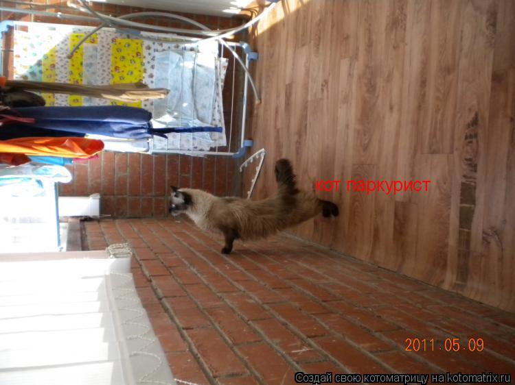 Котоматрица: кот паркурист