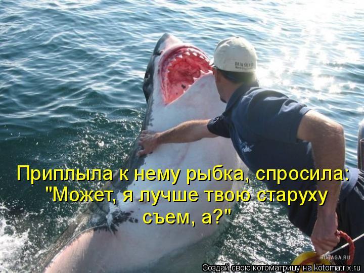 Котоматрица - Приплыла к нему рыбка, спросила: