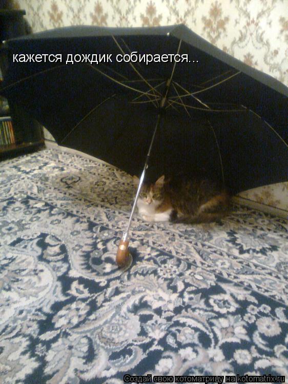 Котоматрица: кажется дождик собирается...