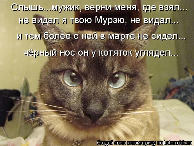 Котоматрица: Слышь...мужик, верни меня, где взял... не видал я твою Мурзю, не видал... и тем более с ней в марте не сидел... чёрный нос он у котяток углядел...