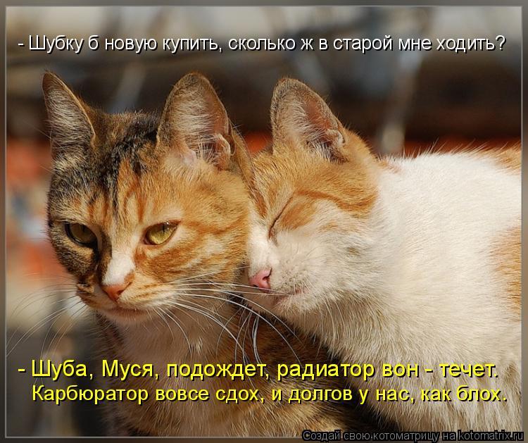 Котоматриця!)))) - Страница 8 979131