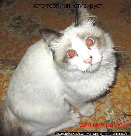 Котоматрица: котэ тебя гипнотизирует! -дай мне рыбу!!!
