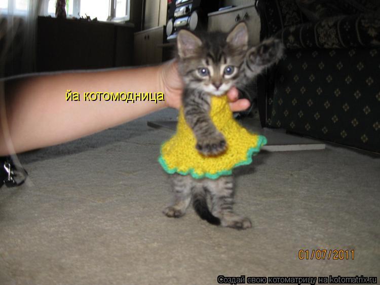 Котоматрица: йа котомодница