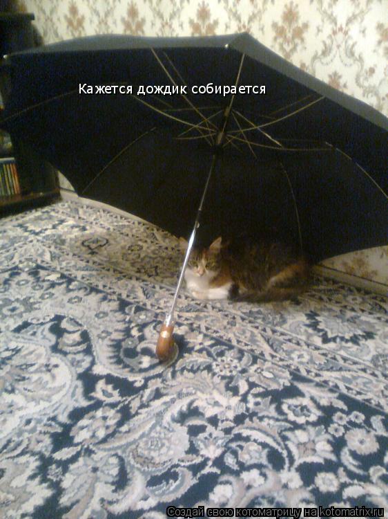 Котоматрица: Кажется дождик собирается
