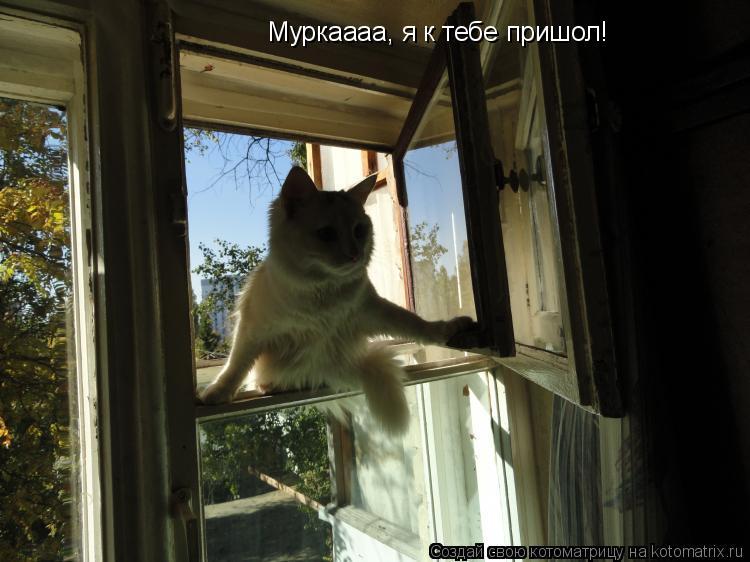 Котоматрица: Муркаааа, я к тебе пришол!