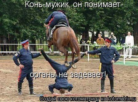 Котоматрица: Конь-мужик, он понимает- органы не задевает!