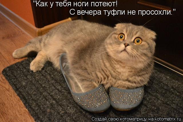 """Котоматрица: """"Как у тебя ноги потеют! С вечера туфли не просохли."""""""