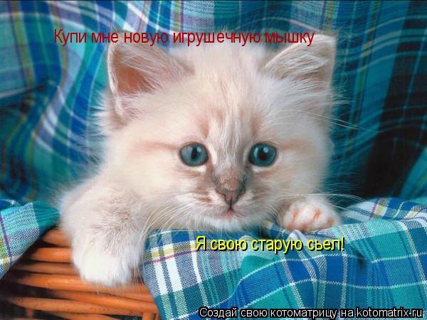 Котоматрица: Купи мне новую игрушечную мышку Я свою старую сьел!