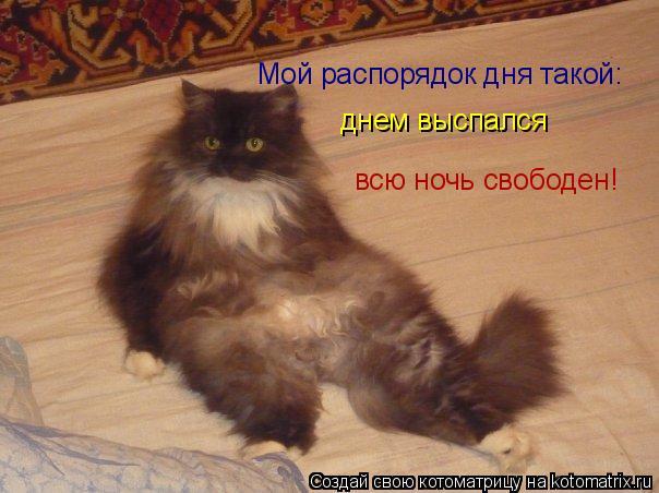Котоматрица: Мой распорядок дня такой: днем выспался  всю ночь свободен!