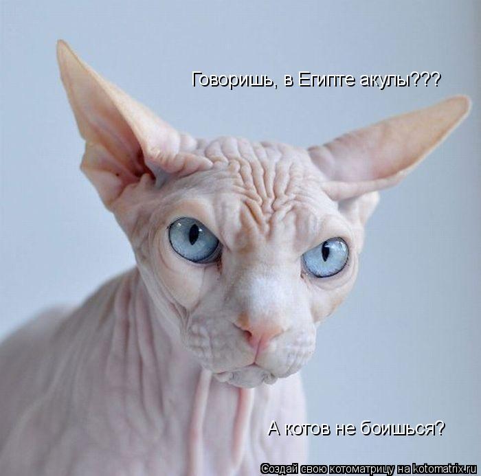 Котоматрица: Говоришь, в Египте акулы??? А котов не боишься?
