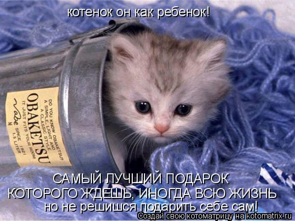 Котоматрица: котенок он как ребенок!  САМЫЙ ЛУЧШИЙ ПОДАРОК КОТОРОГО ЖДЕШЬ, ИНОГДА ВСЮ ЖИЗНЬ но не решишся подарить себе сам!