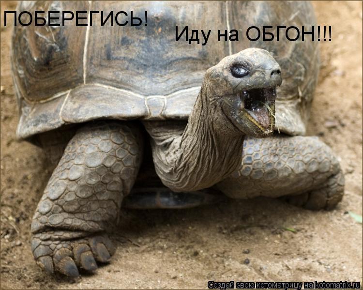 Котоматрица: ПОБЕРЕГИСЬ!  Иду на ОБГОН!!!
