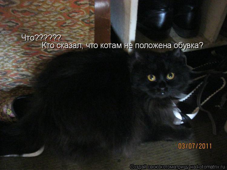 Котоматрица: Что?????? Кто сказал, что котам не положена обувка?