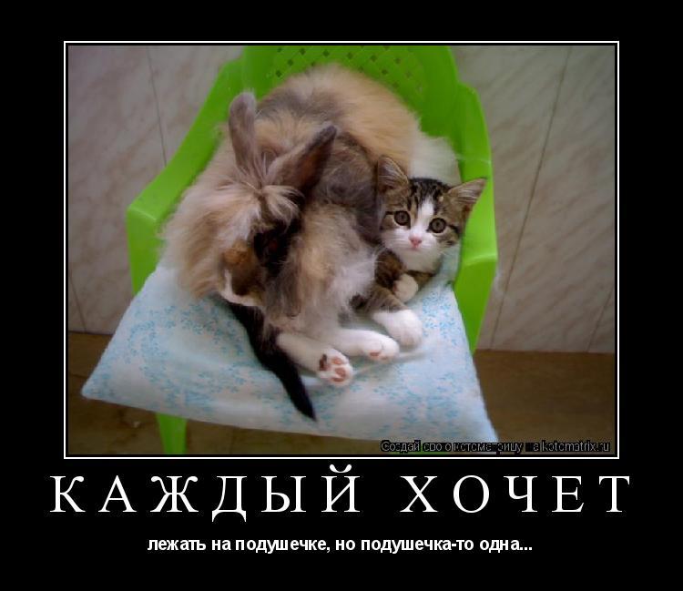 Котоматрица: КАЖДЫЙ ХОЧЕТ лежать на подушечке, но подушечка-то одна...