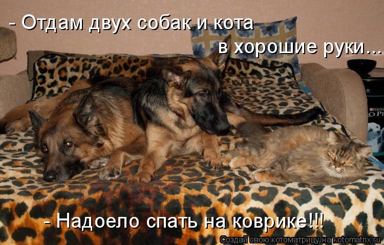 Котоматрица: - Отдам двух собак и кота  в хорошие руки... - Надоело спать на коврике!!!