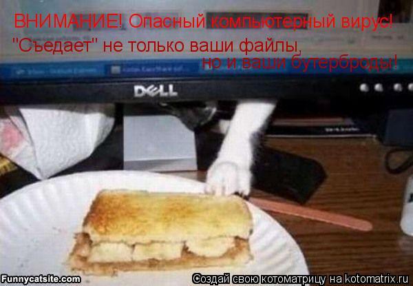 """Котоматрица: ВНИМАНИЕ! Опасный компьютерный вирус! """"Съедает"""" не только ваши файлы,  но и ваши бутерброды!"""
