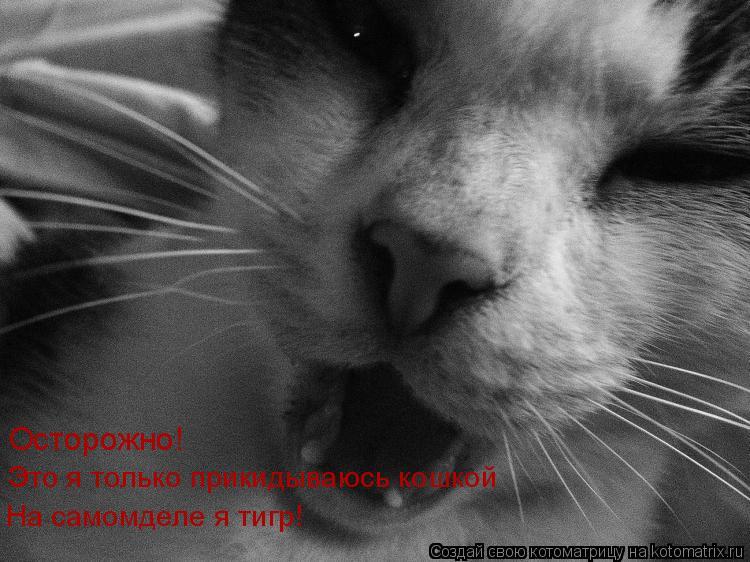 Котоматрица: Осторожно! Это я только прикидываюсь кошкой На самомделе я тигр!