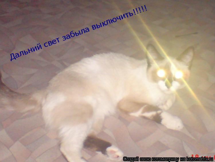 Котоматрица: Дальний свет забыла выключить!!!!!