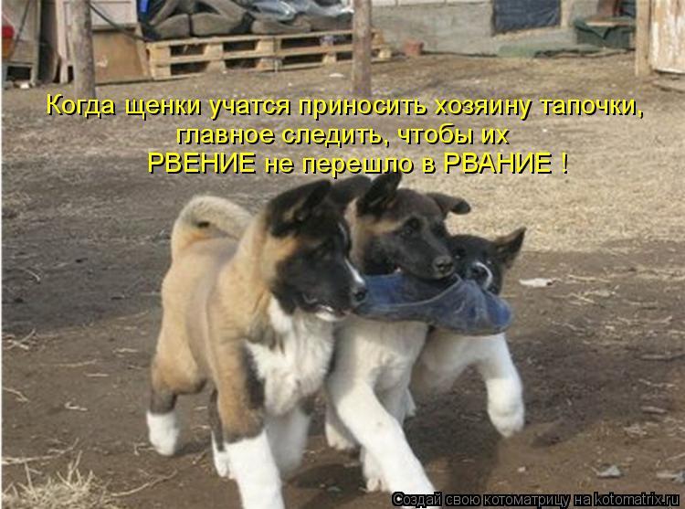 Котоматриця!)))) - Страница 8 979589