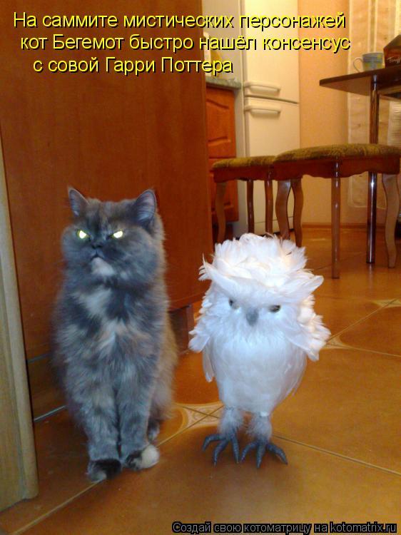 Котоматрица: На саммите мистических персонажей  кот Бегемот быстро нашёл консенсус  с совой Гарри Поттера