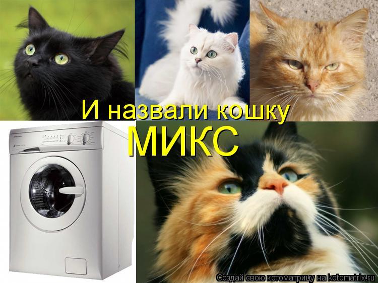 Котоматрица: И назвали кошку МИКС