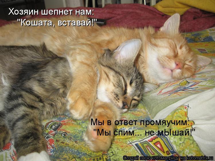 """Котоматрица: Хозяин шепнет нам: """"Кошата, вставай!"""" Мы в ответ промяучим: """"Мы спим... не мЫшай!"""""""