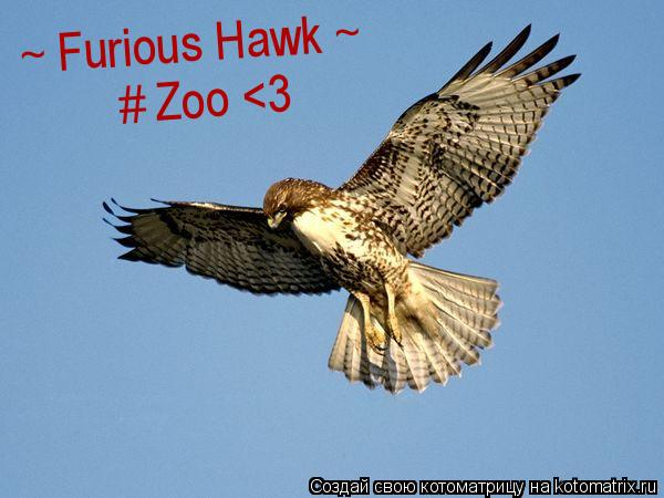 Котоматрица: ~ Furious Hawk ~ # Zoo <3