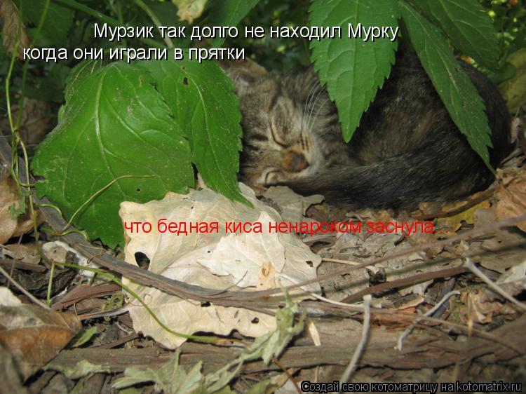 Котоматрица: Мурзик так долго не находил Мурку когда они играли в прятки что бедная киса ненароком заснула...