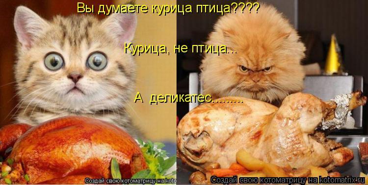 Котоматрица: Вы думаете курица птица???? А  деликатес.........   Курица, не птица...