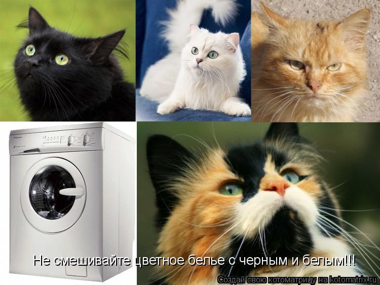 Котоматрица: Не смешивайте цветное белье с черным и белым!!!