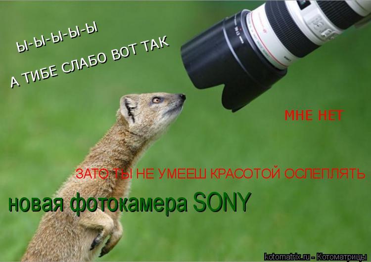 Котоматрица: Ы-Ы-Ы-Ы-Ы А ТИБЕ СЛАБО ВОТ ТАК МНЕ НЕТ ЗАТО ТЫ НЕ УМЕЕШ КРАСОТОЙ ОСЛЕПЛЯТЬ новая фотокамера SONY
