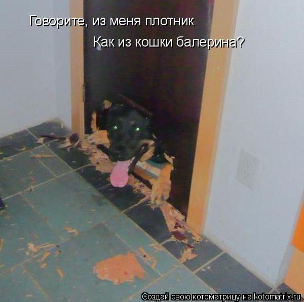 Котоматрица: Говорите, из меня плотник Как из кошки балерина?