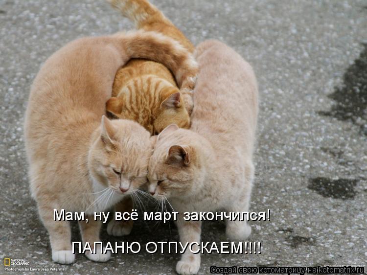 Котоматрица - Мам, ну всё март закончился! ПАПАНЮ ОТПУСКАЕМ!!!!