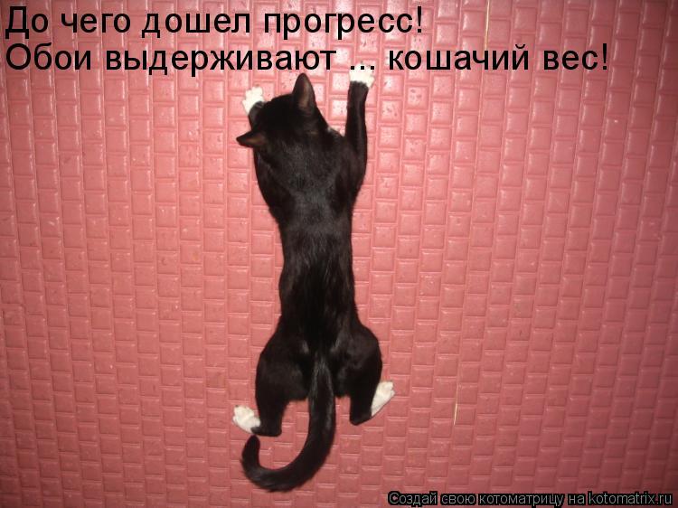 Котоматрица - До чего дошел прогресс! Обои выдерживают ... кошачий вес!