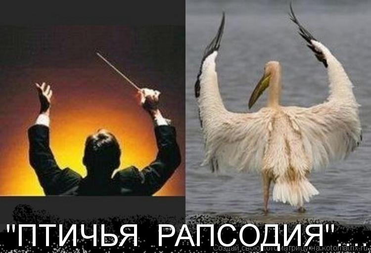 "Котоматрица: ""ПТИЧЬЯ  РАПСОДИЯ""....."