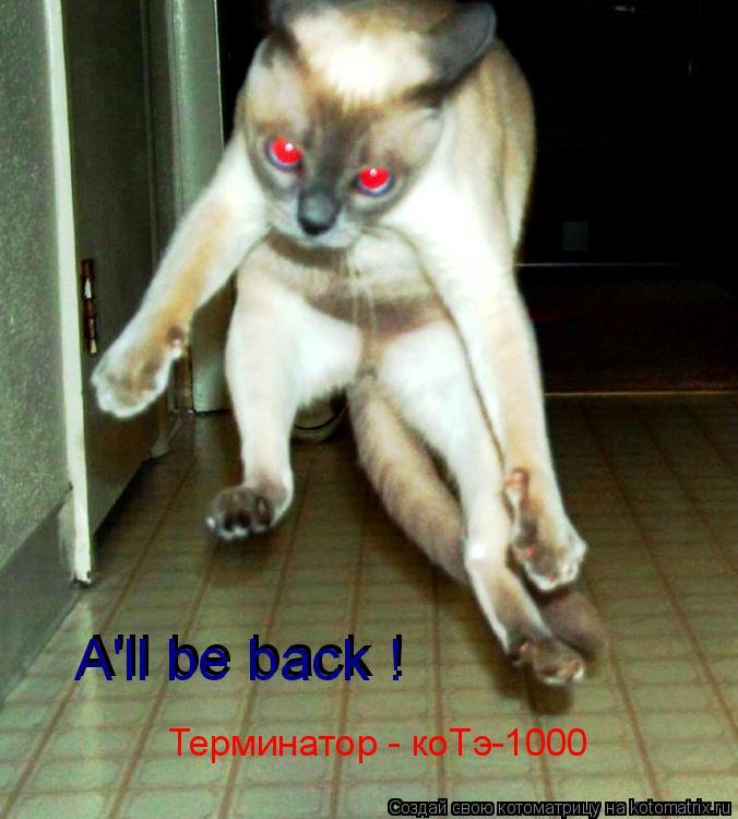 Котоматрица: Терминатор - коТэ-1000 A'll be back ! A'll be back !
