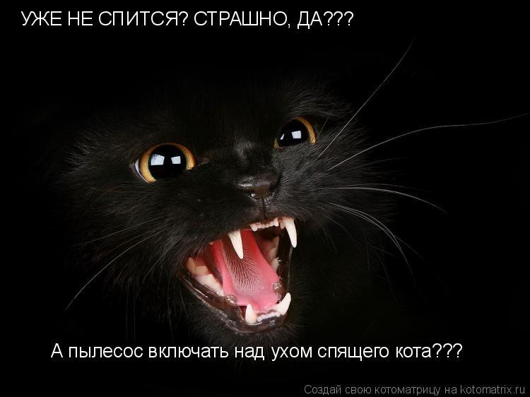 Котоматрица: УЖЕ НЕ СПИТСЯ? СТРАШНО, ДА??? А пылесос включать над ухом спящего кота???