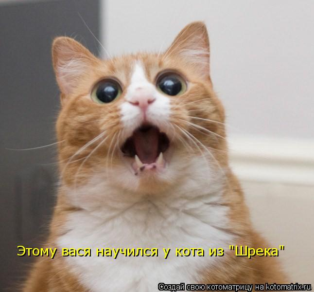 """Котоматрица: Этому вася научился у кота из """"Шрека"""""""