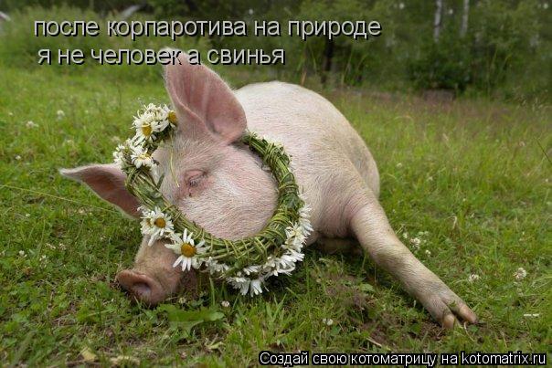 Котоматрица: после корпаротива на природе я не человек а свинья