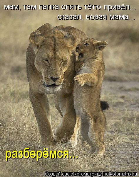 http://kotomatrix.ru/images/lolz/2011/08/29/980140.jpg