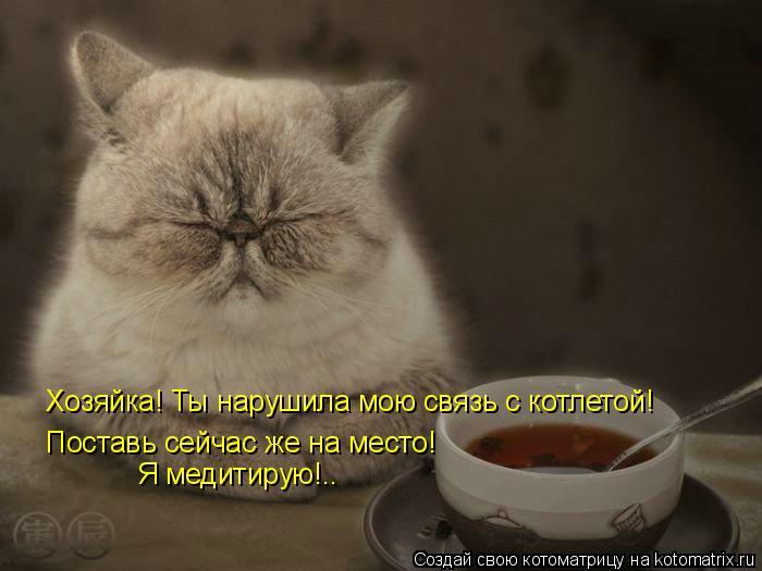 Котоматрица: Хозяйка! Ты нарушила мою связь с котлетой! Поставь сейчас же на место! Я медитирую!..