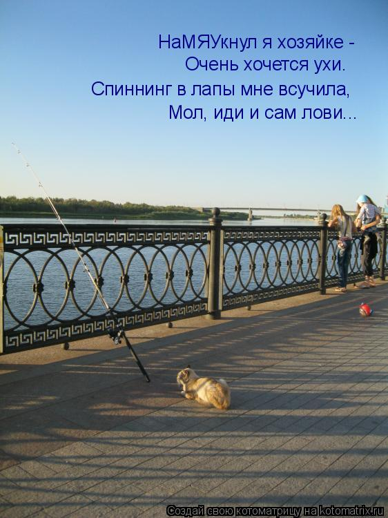 Котоматриця!)))) - Страница 8 980179