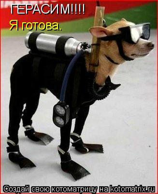 Котоматрица: ГЕРАСИМ!!!! Я готова.