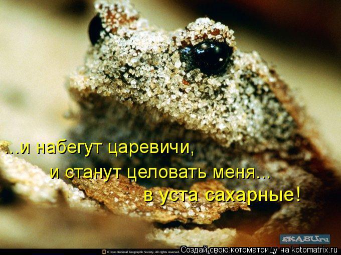 Котоматрица - в уста сахарные! ...и набегут царевичи,  и станут целовать меня...