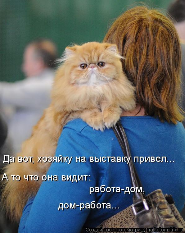 Котоматриця!)))) - Страница 8 980243