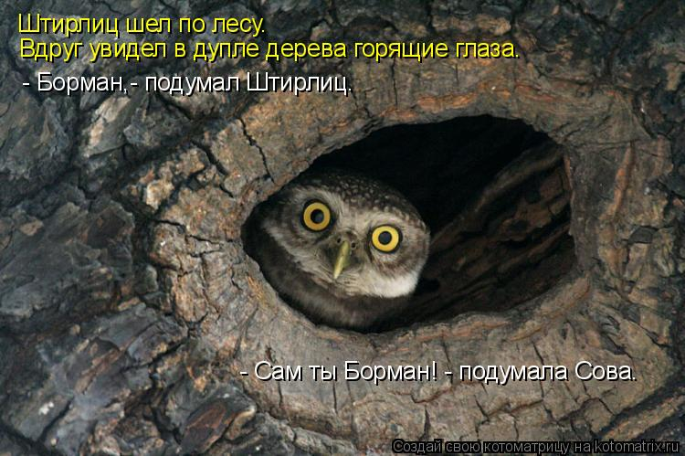Котоматрица: Штирлиц шел по лесу. Вдруг увидел в дупле дерева горящие глаза. - Борман,- подумал Штирлиц. - Сам ты Борман! - подумала Сова.